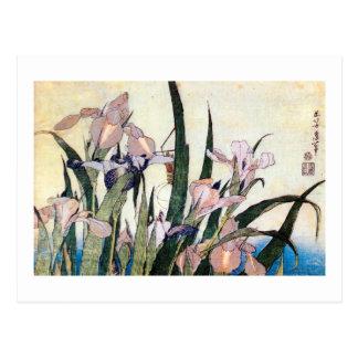 杜若ときりぎりす, 北斎 Iris und Heuschrecke, Hokusai Postkarte