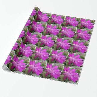 003a Weihnachtskaktussblüte Geschenkpapier