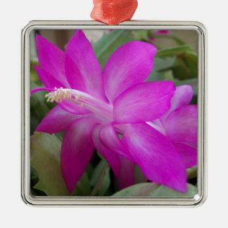 003a Weihnachtskaktussblüte Silbernes Ornament