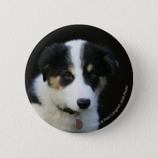 12 Wochen-alter Border-Collie-Welpe Runder Button 5,1 Cm