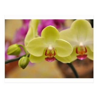 1383103436  -- gelbes orchid.jpg postkarte