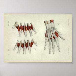 Drucke mit Anatomie