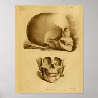 1854 Vintager menschlicher Poster
