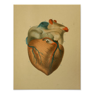 1879 Vintages Anatomie-Druck-Menschen-Herz Poster