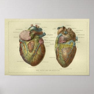 1886 Vintager menschlicher Herz-Anatomie-Druck Poster