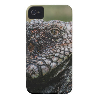 1920px-Iguanidae_head_from_Venezuela Case-Mate iPhone 4 Hüllen
