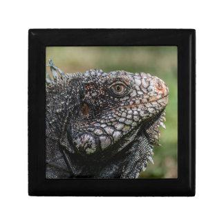 1920px-Iguanidae_head_from_Venezuela Erinnerungskiste