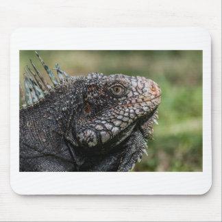 1920px-Iguanidae_head_from_Venezuela Mousepad