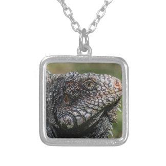 1920px-Iguanidae_head_from_Venezuela Versilberte Kette