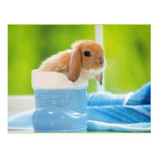 20_baby_animals (4) postkarte