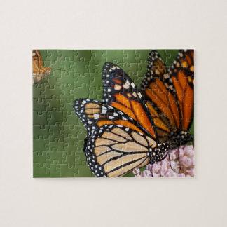 2 Monarchen auf Milkweed-Fotopuzzlespiel Puzzle