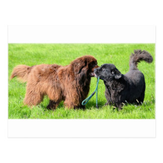 2 newfies.png postkarte