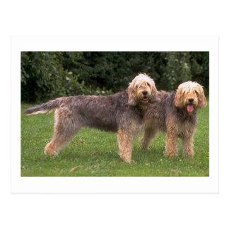 2 Otterhounds full.png Postkarte