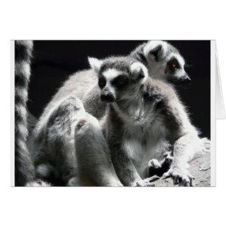 2 Ringtail Lemur Karte