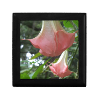 2 rosa Engelstrompete-Blumen Geschenkbox