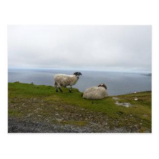 2 Sheeps Postkarte