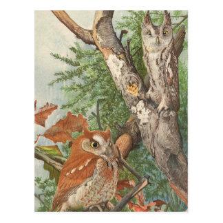 2 verärgerte Vintage Eulen in einem Baum Postkarte