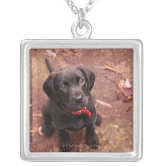 35 Wochen-alter schwarzer Labrador Versilberte Kette