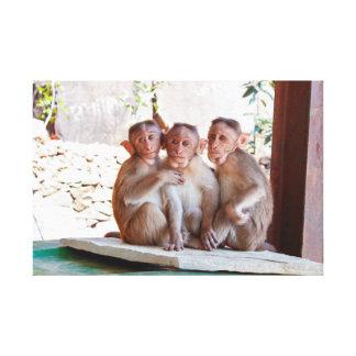 3 Affen Leinwanddruck