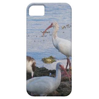 3 IBIS auf dem Ufer von Florida-Bucht iPhone 5 Etui