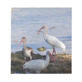 3 IBIS auf dem Ufer von Florida-Bucht Notizblock