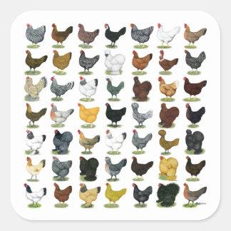 49 Huhn-Hennen Quadratischer Aufkleber