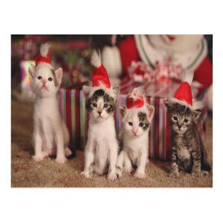 4 Kätzchen-Weihnachtskarte Postkarte