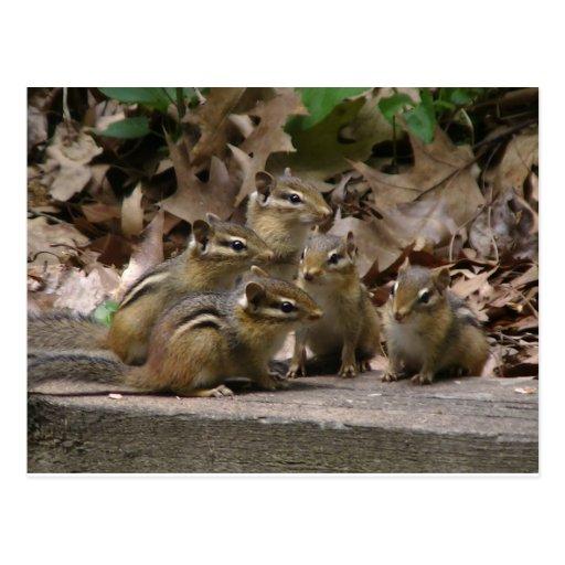 5 BabyChipmunks Postkarten