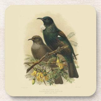 6 Vintage Vögel der Wissenschafts-NZ - Getränkeuntersetzer
