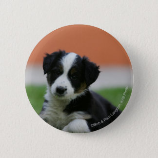 6 Wochen-alte Border-Collie Runder Button 5,7 Cm