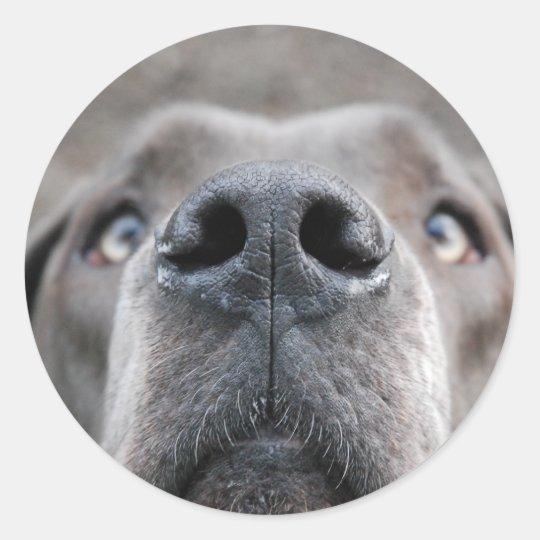 7,6 cm Aufkleber Doggennase