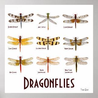 9 Libellen-Spezies-Plakat Poster