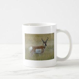 A0001 Pronghorn Antilopen-Dollar Kaffeetasse