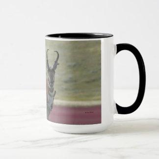 A0024 Pronghorn Antilopen-Tasse Tasse