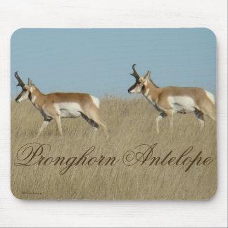 A0045 Pronghorn Antilopen-Dollars Mousepad