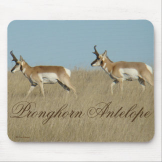 A0045 Pronghorn Antilopen-Dollars Mousepads