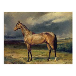 Abdul Medschid das arabische Pferd der Kastanie, Postkarte