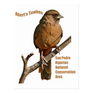Aberts Towhee Postkarte