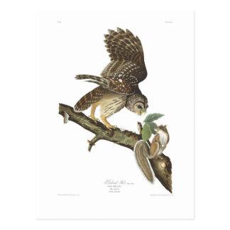 Abgehaltene Eule Audubon Platten-46 Postkarte