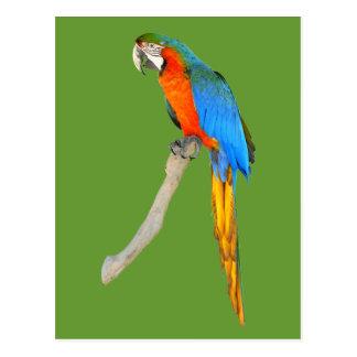 Abgeschiedener Scarlet Macaw Postkarte