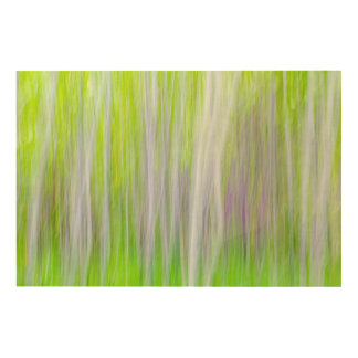 Abstrakt Fluss-Spur von der Aspen-Baum-| Yakima, Holzleinwand