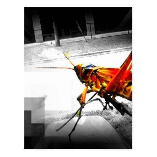 abstraktes Foto der großen gelben Heuschrecke Postkarte