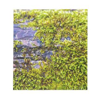 abstraktes grünes moss_on Holz im Winter Notizblock