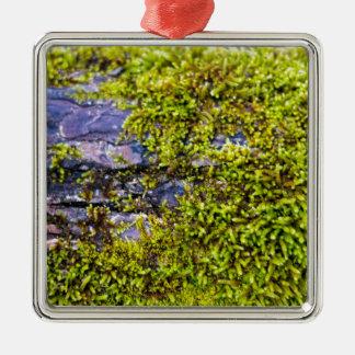 abstraktes grünes moss_on Holz im Winter Silbernes Ornament