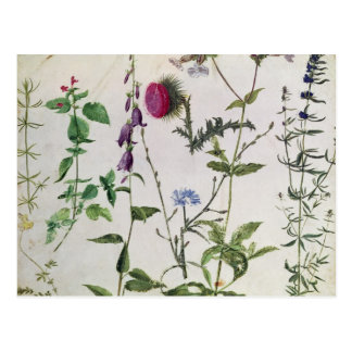 Acht Studien der wilden Blumen Postkarte