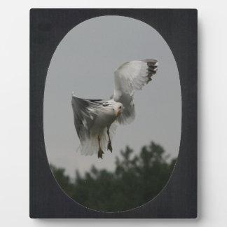 Addieren Sie Foto-ovales Feld (Schwarzes) Fotoplatte