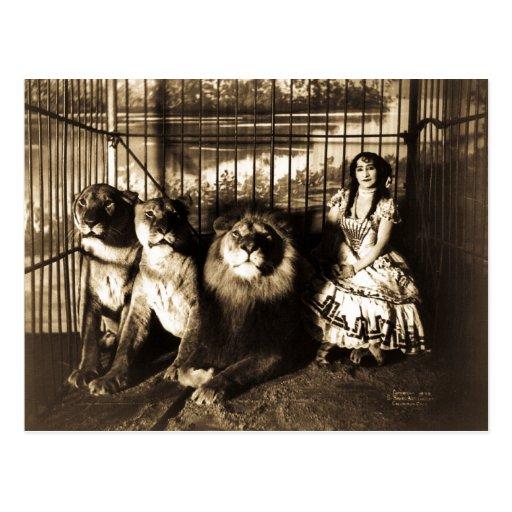Adjie und die Löwen 1899 Vintager Zirkus Postkarten
