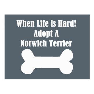Adoptieren Sie einen Norwich-Terrier Postkarte