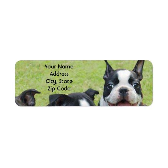 Adressen-Etiketten Bostons Terrier Rücksendeetiketten