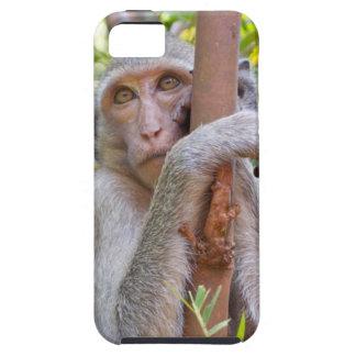 Affe iPhone 5 Hüllen